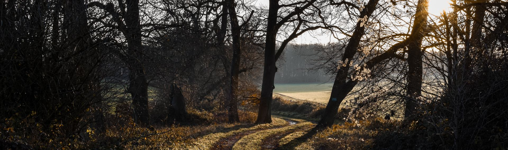 Basingstoke office woodland